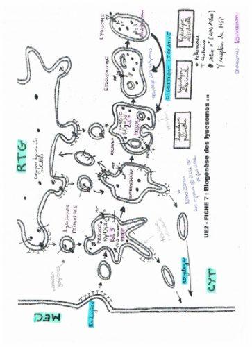 Voie des Endosomes (UE 2a)