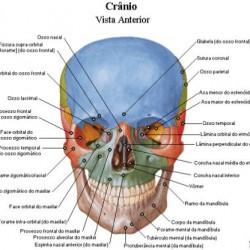 atlas-de-anatomia-humana-netter-1-638
