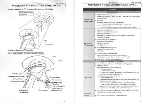 Système nerveux