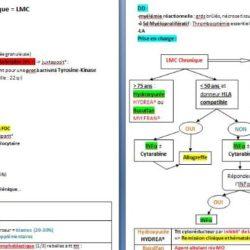 LMC fiche niveau II