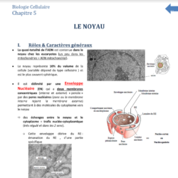 Cours biocelle chap 1
