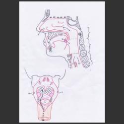 Schéma d'anatomie